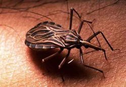 Chagas Disease: The Neglected Killer