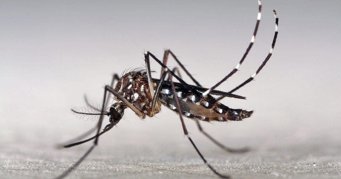 Zika Virus: The hypocrisy of telling women to delay pregnancy