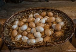 Sisterhood Unfulfilled: How all the Eggs Ended up in Her Basket